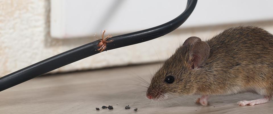 mysz przy kablu